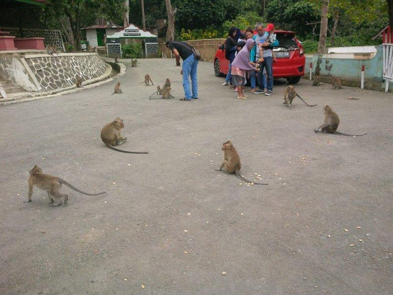 Di Desa Ini, Kawanan Monyet Hidup Berdampingan Dengan Warga