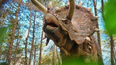 HOAX : Muncul Triceraptos di Magetan Jawa TImur