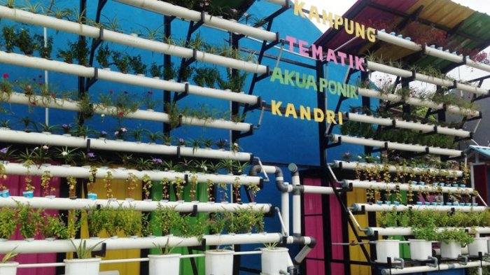 Menarik Dikunjungi! Wisata Kampung Tematik Akuaponik Kandri