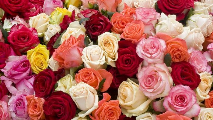 Tahukah kalian makna dari setiap warna pada bunga mawar?
